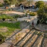 Seit Sewa Ashram auf dem heutigen Stück Land existiert, spielt der Gartenbau eine wichtige Rolle als Beschäftigungstherapie, zur Produktion von Lebensmitteln und zum Erzeugen einer schönen Umgebung und angenehmen Atmosphäre.