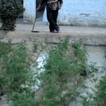 Hier sieht man, wie ein Mitarbeiter sich um die Bewässerung der Tomaten kümmert. Die meisten Tomaten werden im Sewa Ashram selbst verzehrt, einige werden aber auch verkauft.